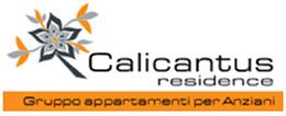 Calicantus